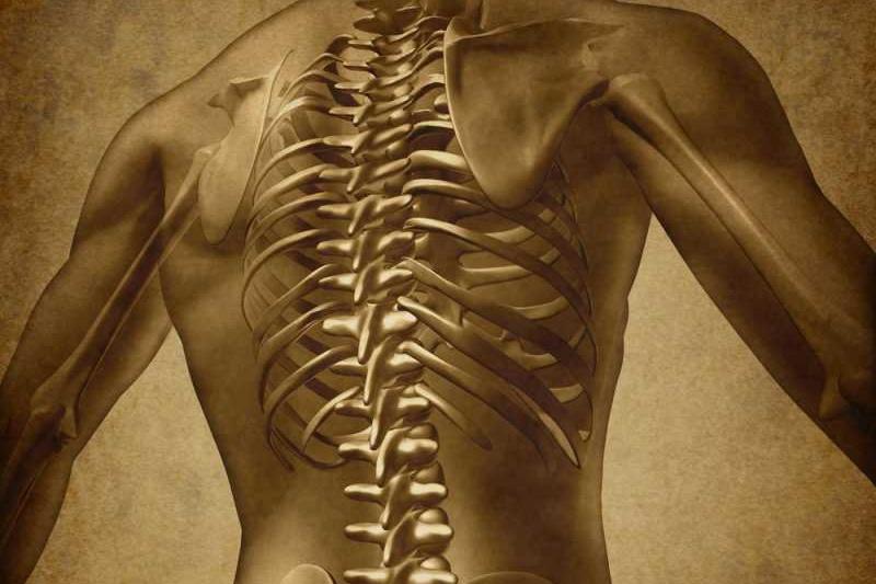 العمود الفقري Human-back