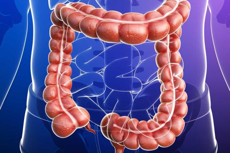 الأمعاء الغليظة Large-intestine-1