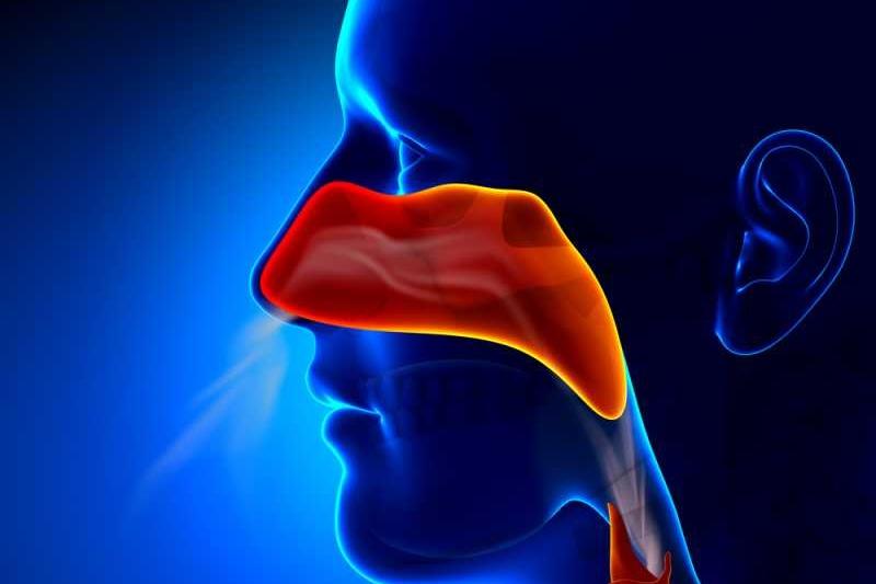 تشريح الأنف Nose-1