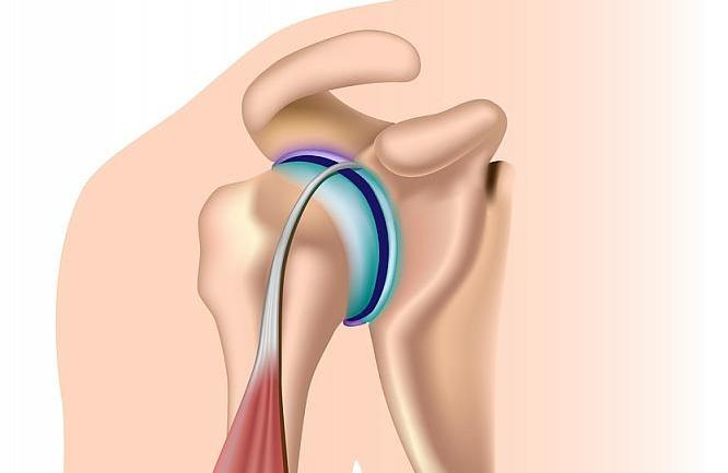 shoulder joint.jpg